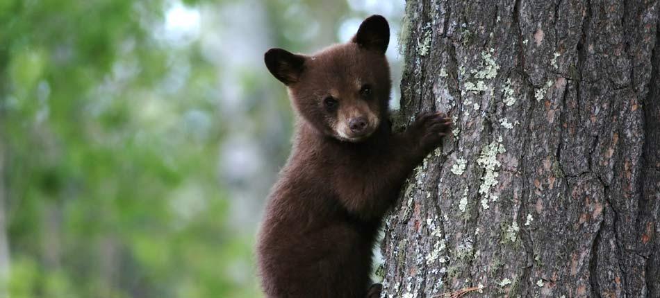 pisgah forest wildlife