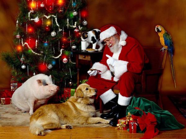 Santa Paws visits UpCountry Brevard