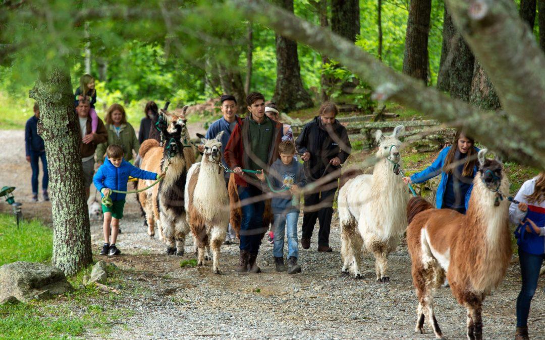 Llama Hike Experience
